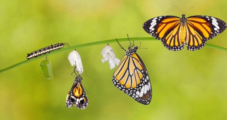 Metamorphosis is nature process for all living beings